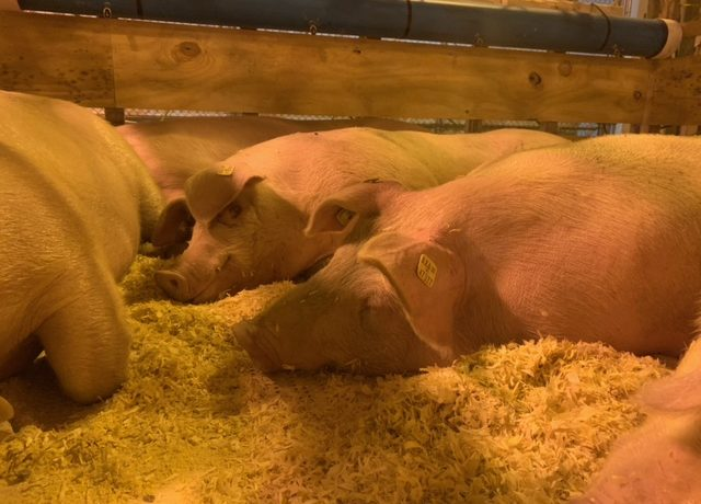 St. Louis Livestock Hub Facility First of Kind in U.S.
